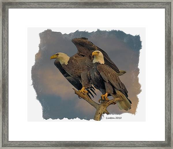 American Bald Eagle Pair Framed Print