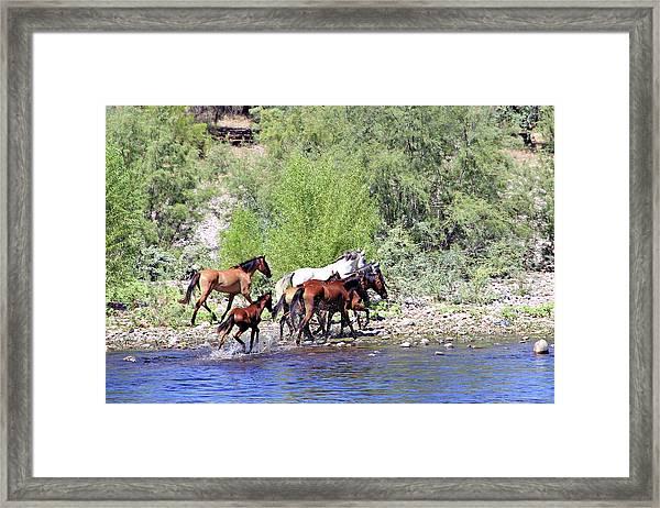 Arizona Wild Horses Framed Print