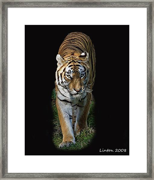 Asian Tiger Framed Print
