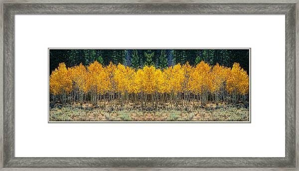 Aspen Stand Framed Print