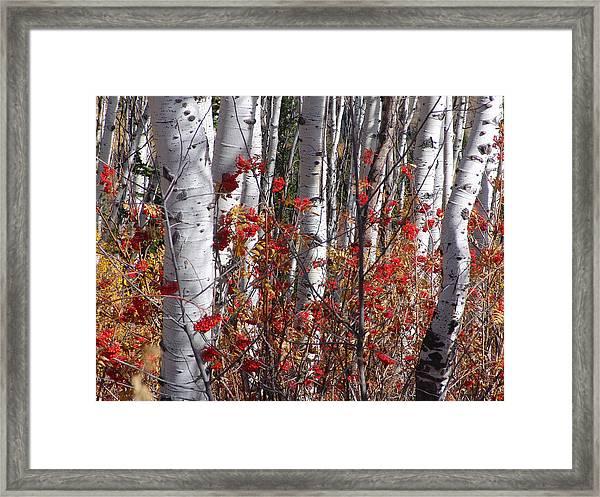 Autumn Splender Framed Print
