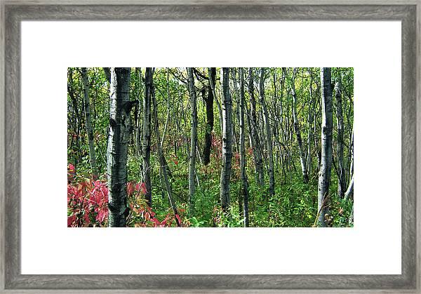 Autumn Woods Framed Print