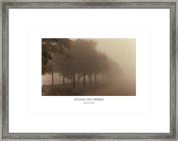 Avenue Des Arbres Framed Print