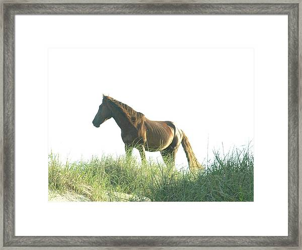 Banker Horse On Dune - 2 Framed Print