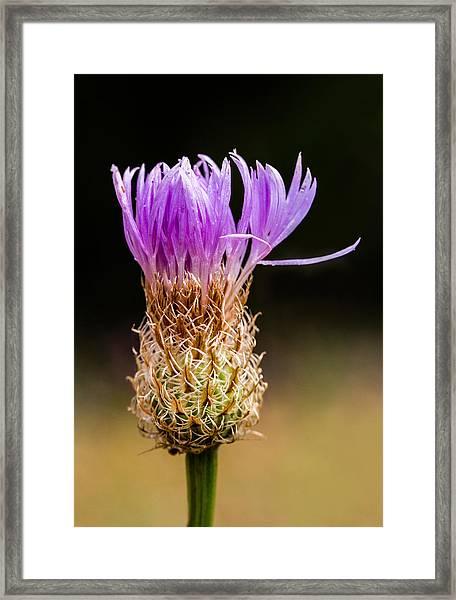 Basket-flower Opening Framed Print