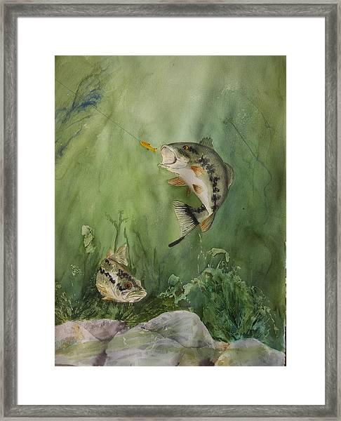 Bass On The Bottom Framed Print
