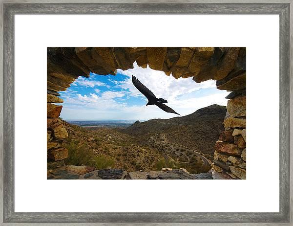 Bird In The Window Framed Print