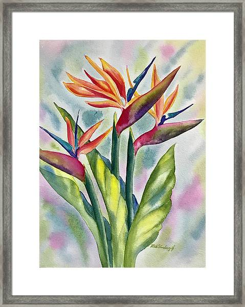 Bird Of Paradise Flowers Framed Print