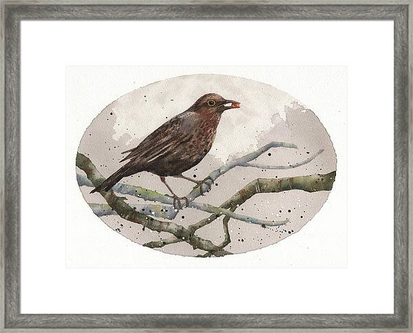 Blackbird Painting Framed Print