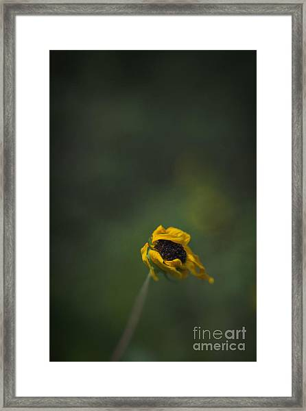 Blowing Framed Print