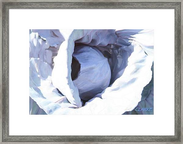 Blue Cabbage Framed Print
