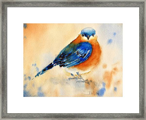 Bluebird #3 Framed Print