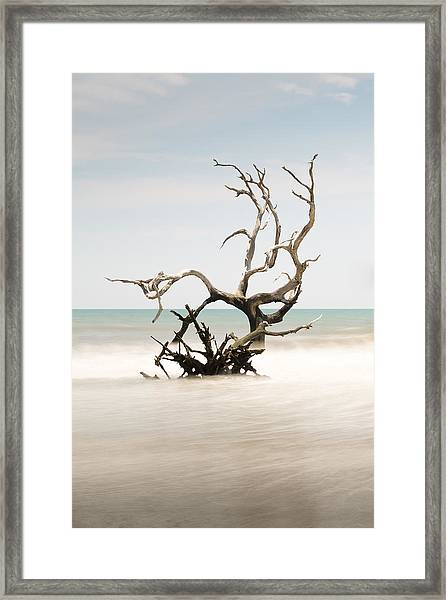 Bulls Island C-vi Framed Print