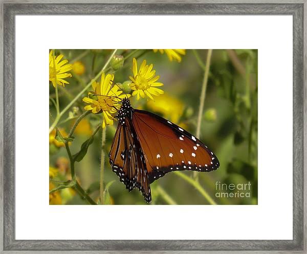 Butterfly 3 Framed Print