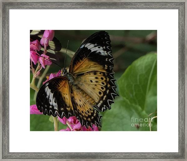 Butterfly 6 Framed Print
