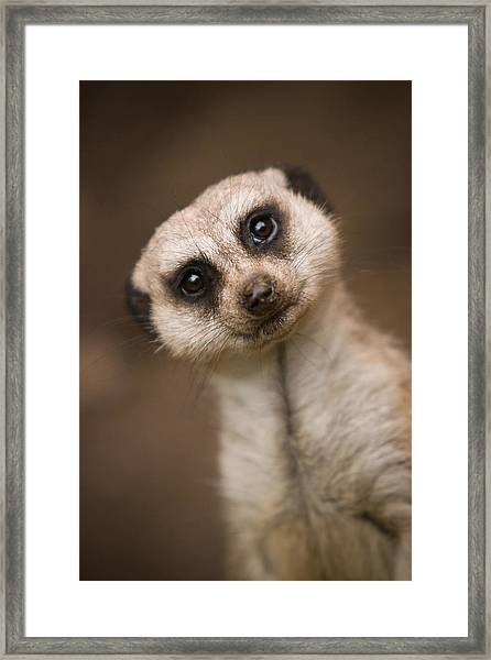 Can I Help You Framed Print