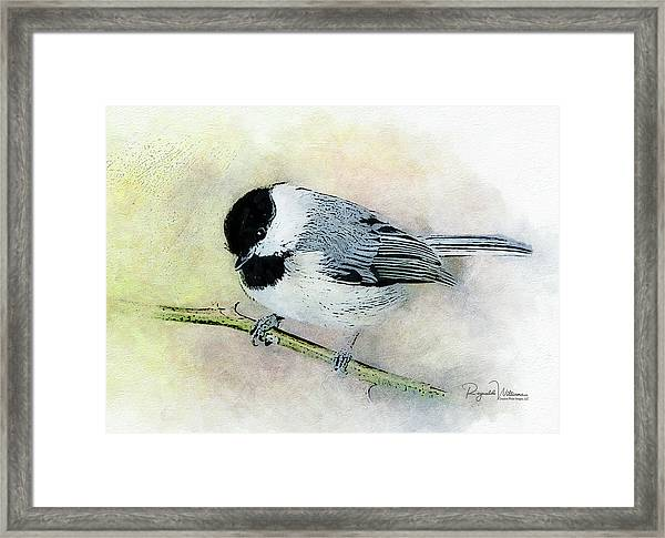 Carolina Chickadee Framed Print