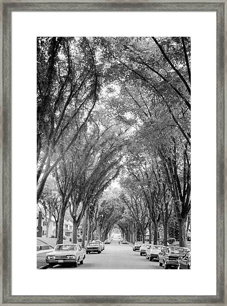 Cathedral Of Trees Framed Print