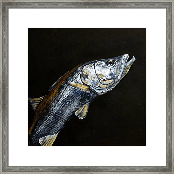 Caught In The Surf Snook Framed Print