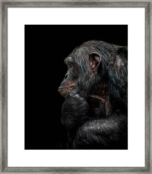 Contemplation  Framed Print