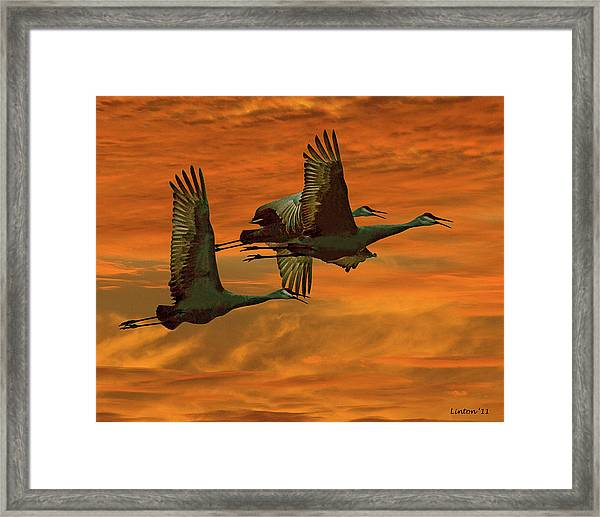 Cranes At Sunrise Framed Print