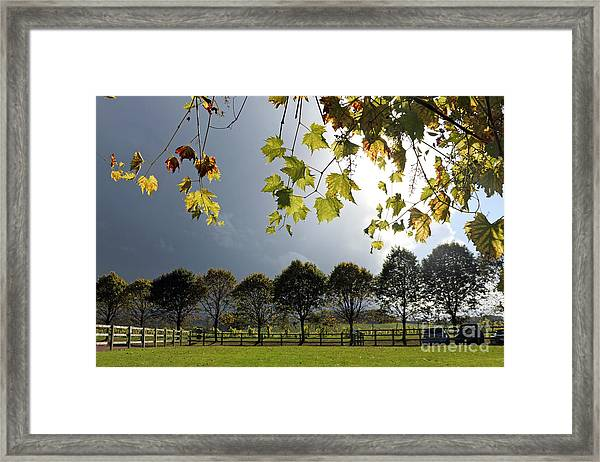 Denbies Vineyard Surrey Uk Framed Print