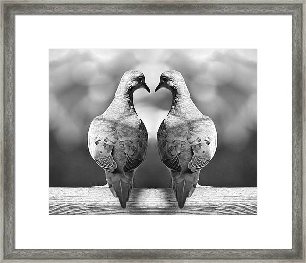 Dove Birds Framed Print