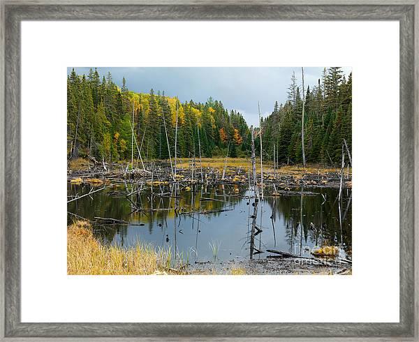 Drowned Trees Framed Print