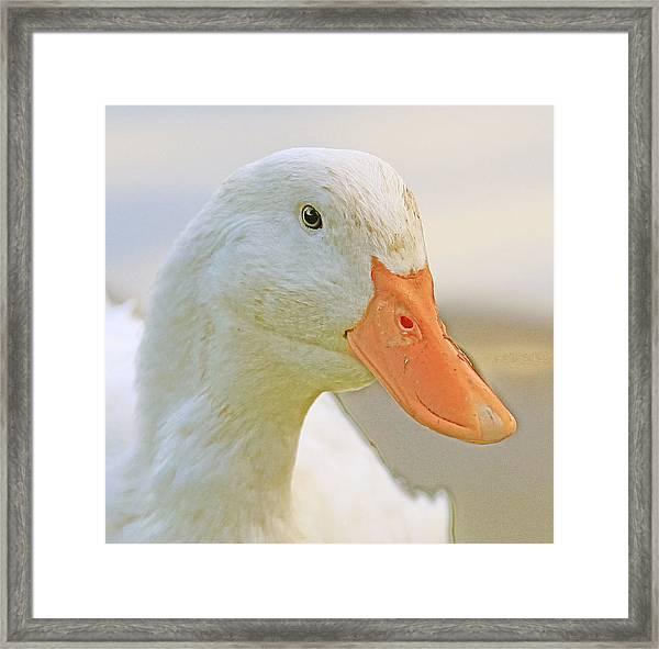 Duck Framed Print by Glenn Vidal