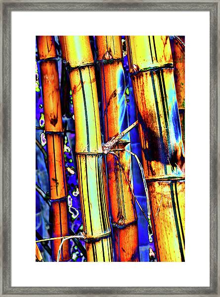 Electric Bamboo 1 Framed Print