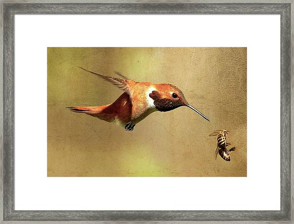 Encounter Framed Print