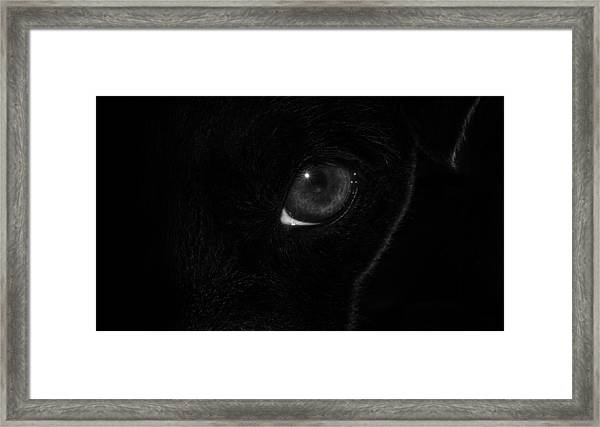 Framed Print featuring the photograph Eye Spy by Nick Bywater