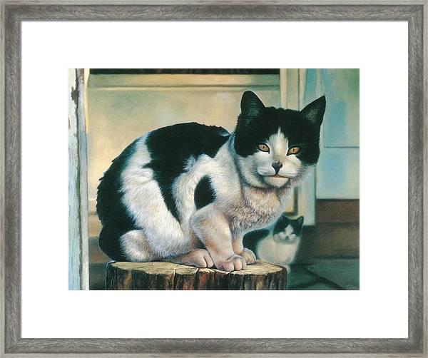 Farm Cat Framed Print by Hans Droog