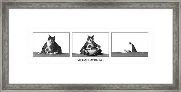 Fat Cat Capsizing Framed Print
