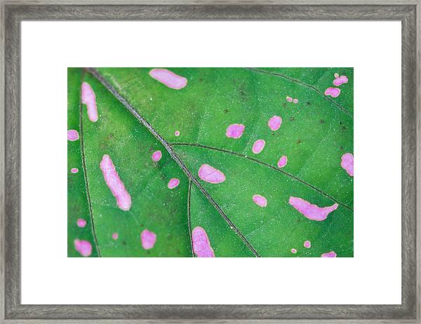 Infectious Framed Print by Az Jackson