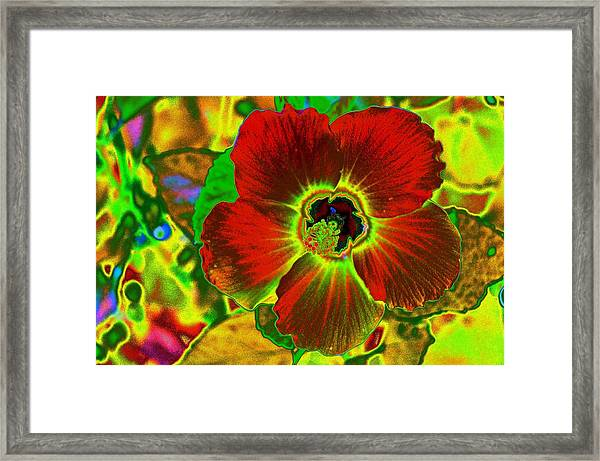 Flaming Hibiscus Framed Print