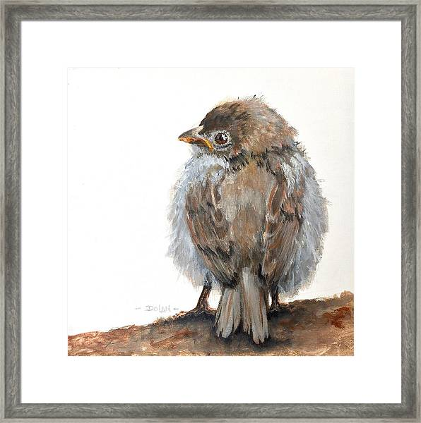 Fledgling Sparrow Framed Print