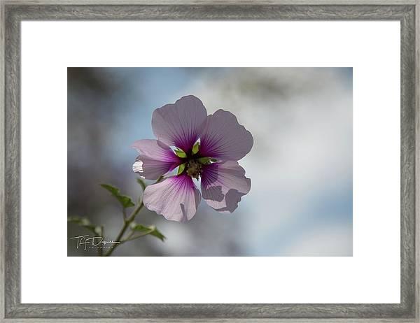 Flower In Focus Framed Print