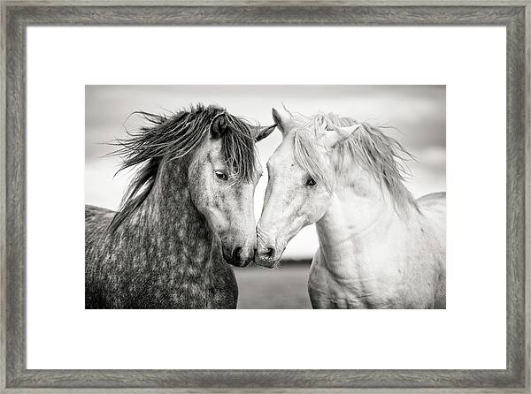 Friends Iv Framed Print by Tim Booth