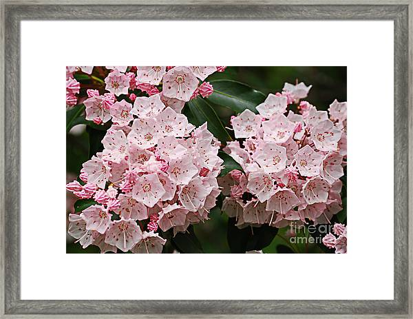 Full Bloom Framed Print