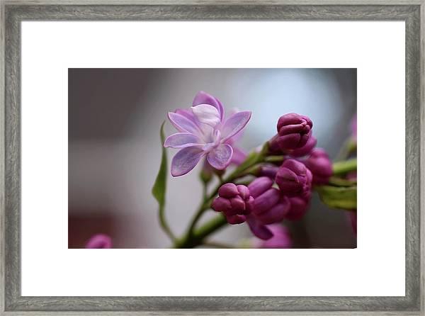 Gentle Strength Framed Print