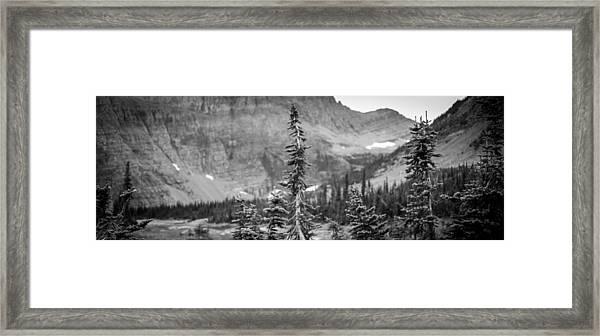 Gnarled Pines Framed Print