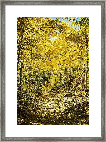 Golden Aspens In Colorado Mountains Framed Print