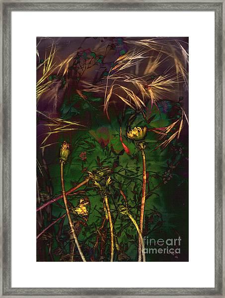 Grasslands Series No. 5 Framed Print by Vinson Krehbiel