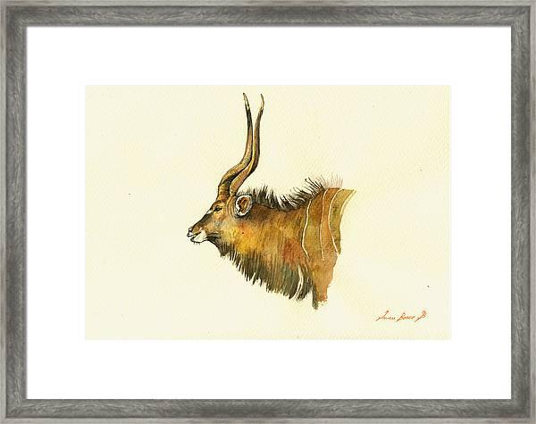 Greater Kudu Framed Print
