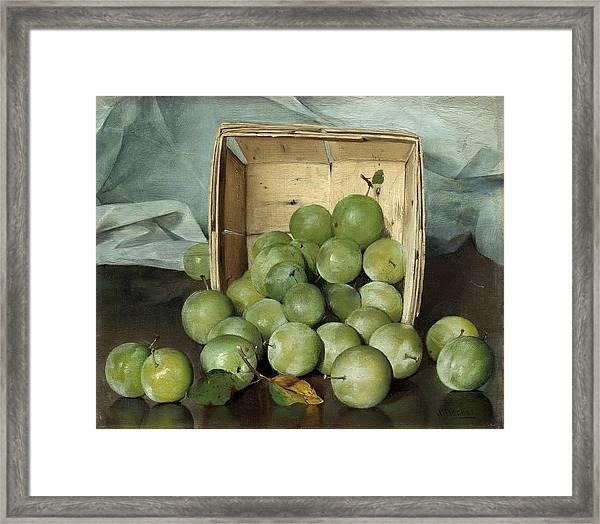 Green Plums Framed Print