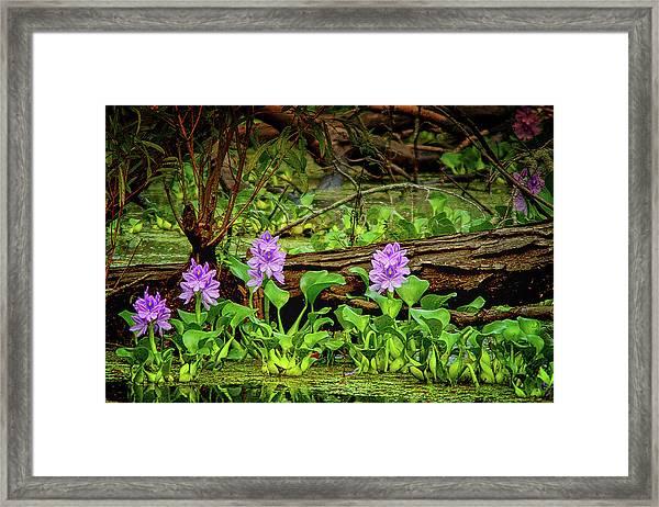 Happy Swamp Framed Print