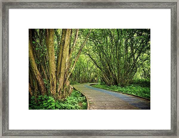 Hatfield Forest Framed Print