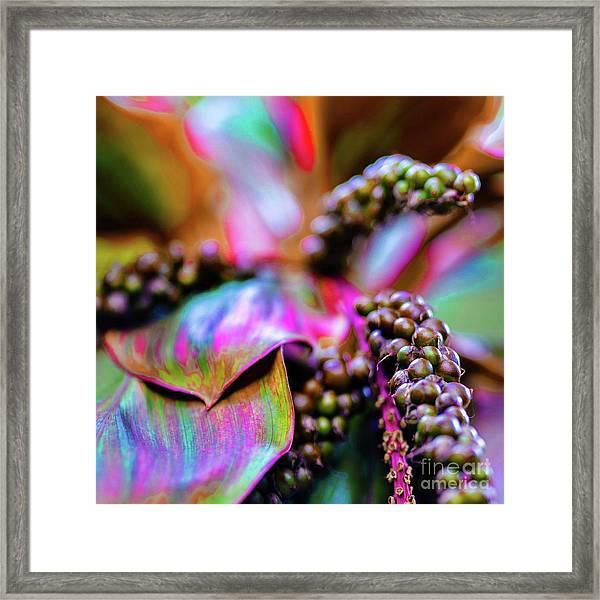 Hawaii Plants And Flowers Framed Print