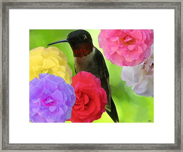 Hummingbird Flower Framed Print by Debra     Vatalaro